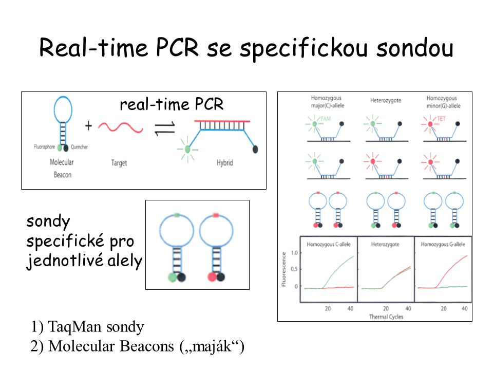 Real-time PCR se specifickou sondou