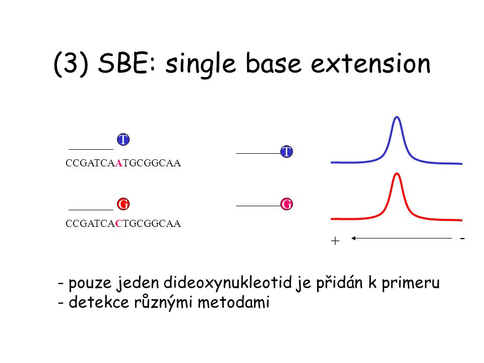(3) SBE: single base extension