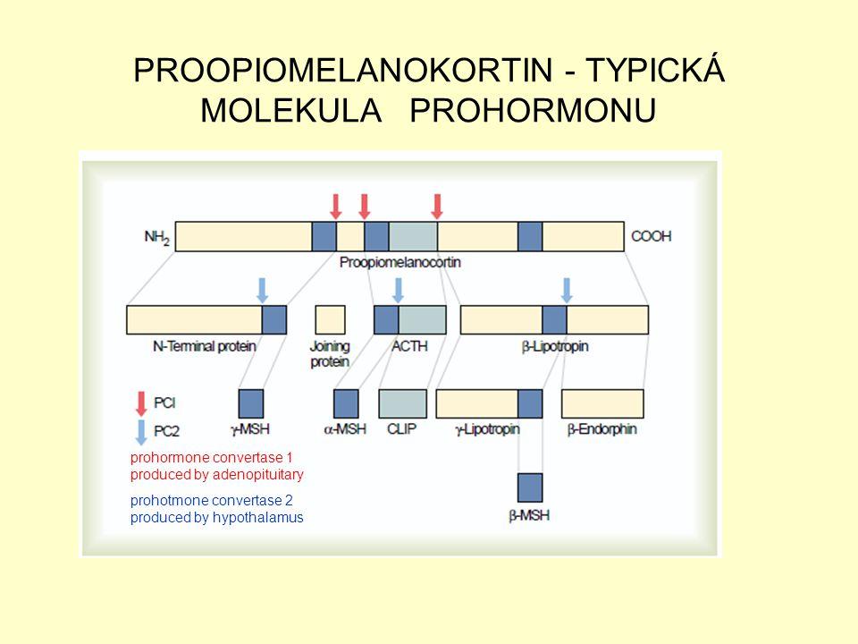 PROOPIOMELANOKORTIN - TYPICKÁ MOLEKULA PROHORMONU