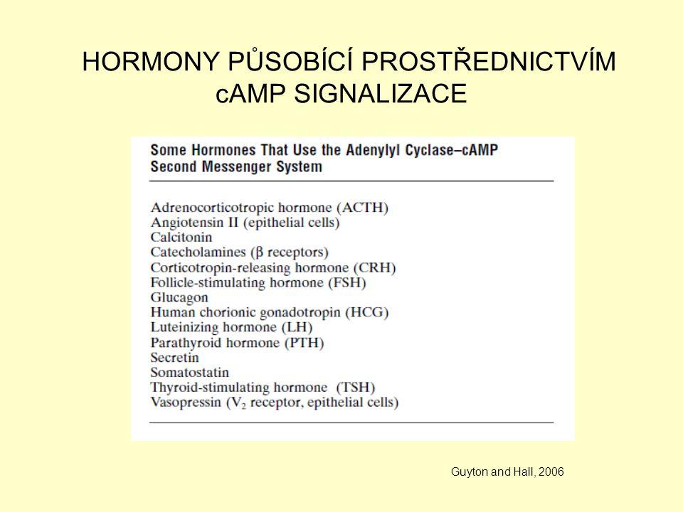 HORMONY PŮSOBÍCÍ PROSTŘEDNICTVÍM cAMP SIGNALIZACE