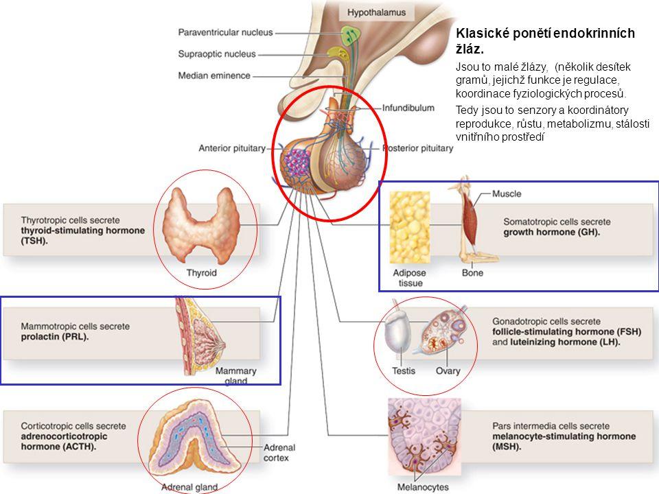 Klasické ponětí endokrinních žláz.