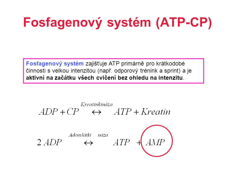 Fosfagenový systém (ATP-CP)