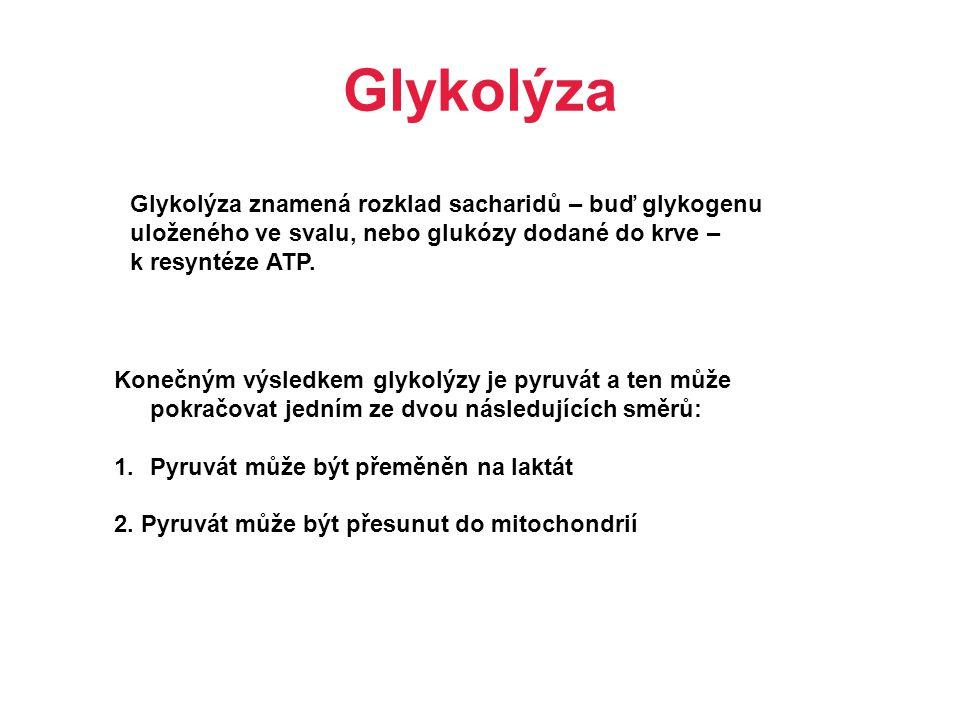 Glykolýza Glykolýza znamená rozklad sacharidů – buď glykogenu uloženého ve svalu, nebo glukózy dodané do krve – k resyntéze ATP.