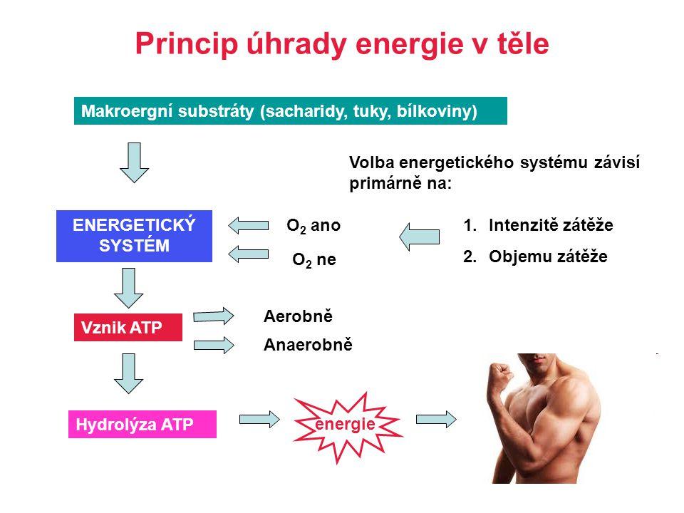Princip úhrady energie v těle