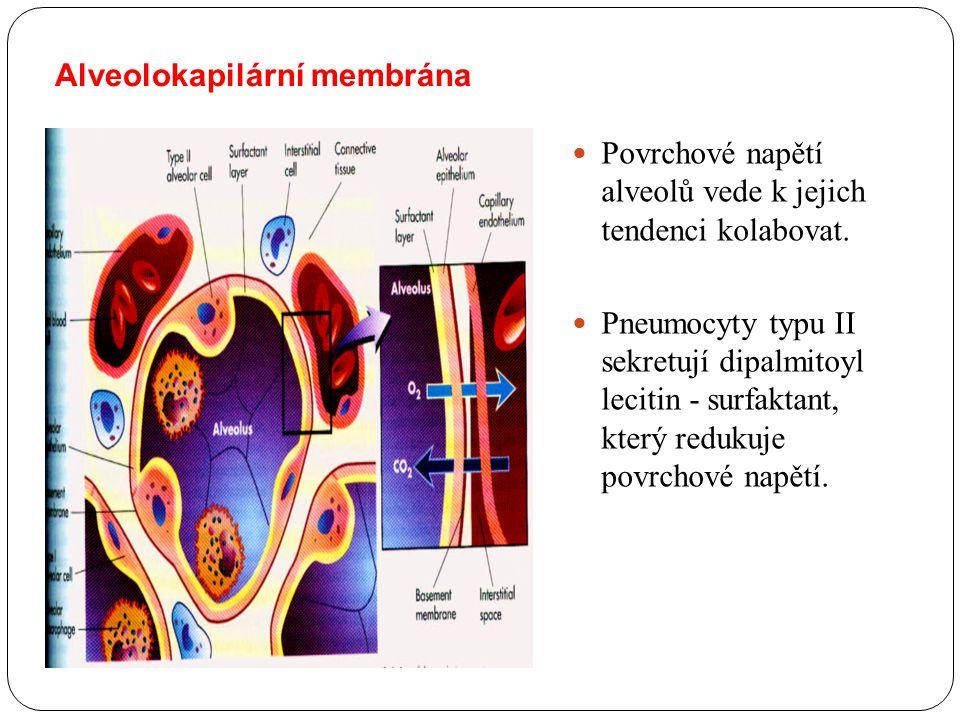 Alveolokapilární membrána