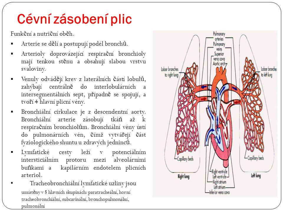 Cévní zásobení plic Funkční a nutriční oběh.