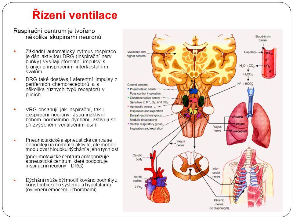 Řízení ventilace Respirační centrum je tvořeno několika skupinami neuronů.