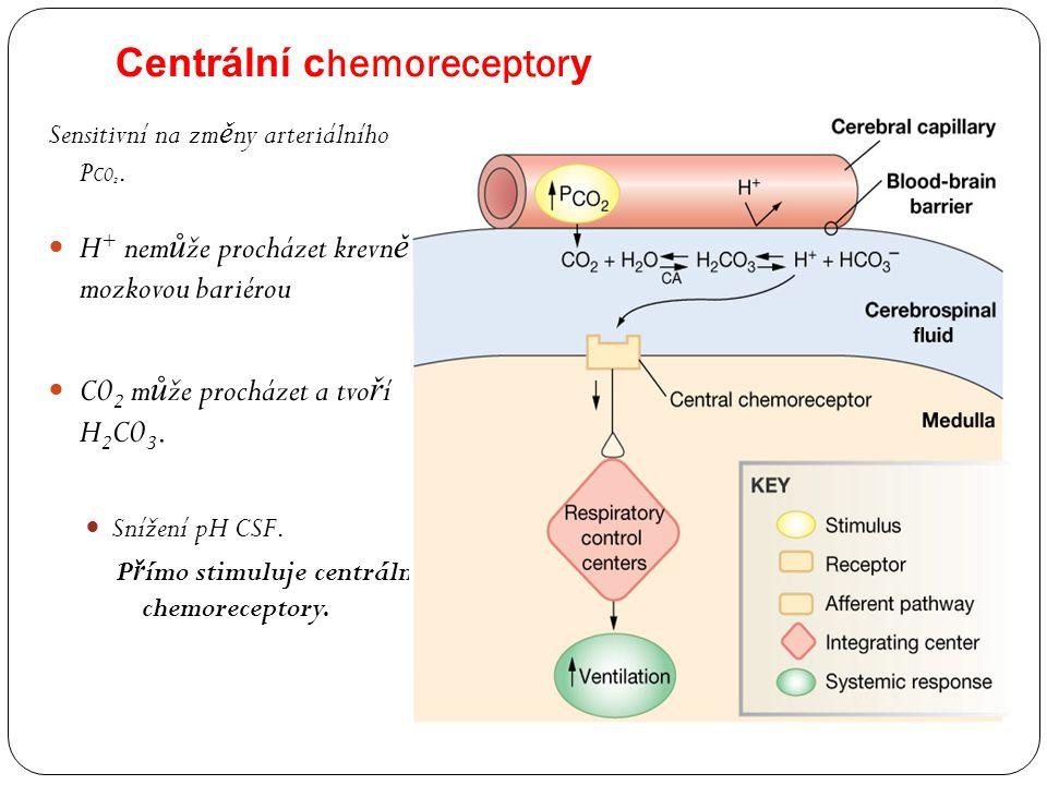Centrální chemoreceptory