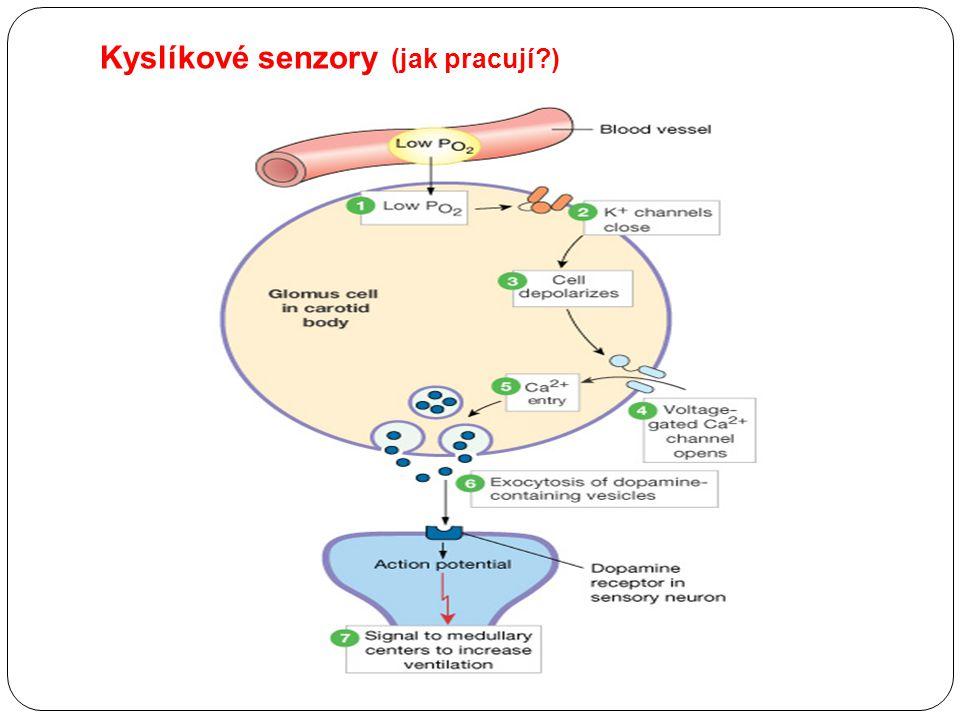 Kyslíkové senzory (jak pracují )