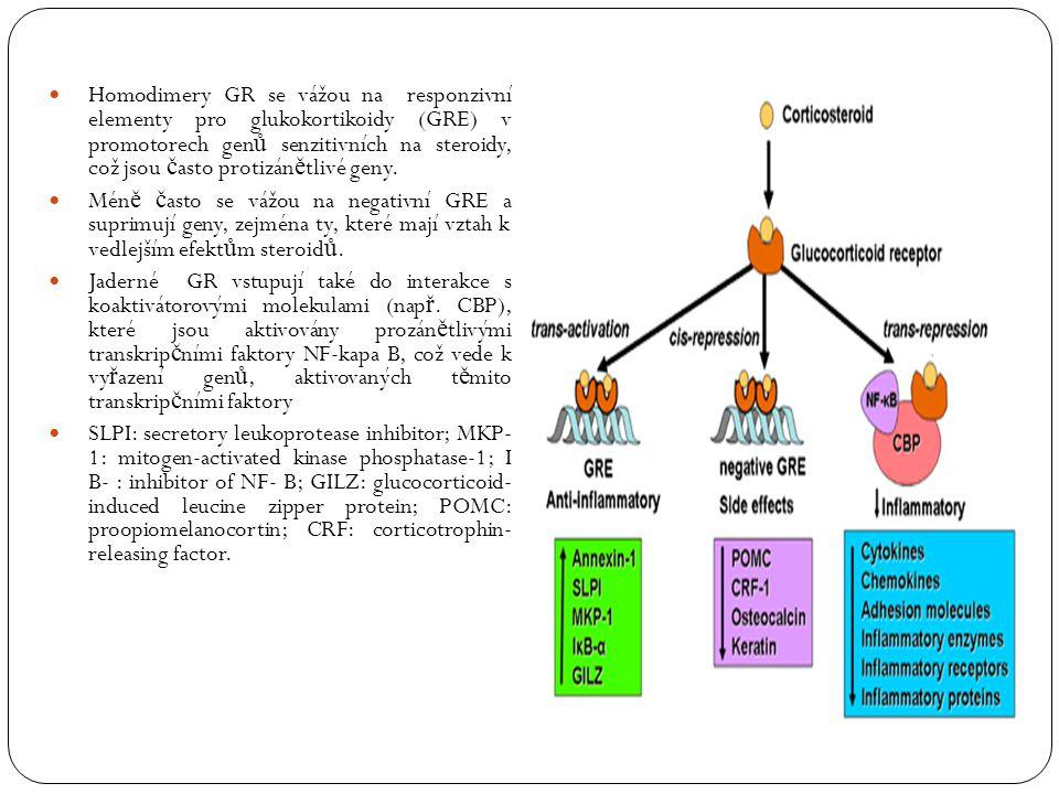Homodimery GR se vážou na responzivní elementy pro glukokortikoidy (GRE) v promotorech genů senzitivních na steroidy, což jsou často protizánětlivé geny.