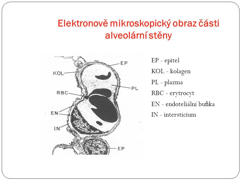 Elektronově mikroskopický obraz části alveolární stěny