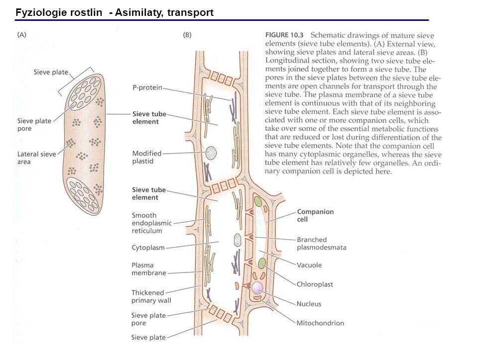 Fyziologie rostlin - Asimilaty, transport