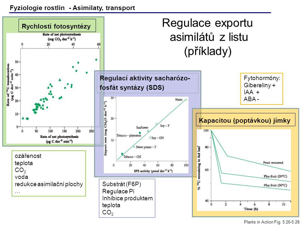 Regulace exportu asimilátů z listu (příklady)