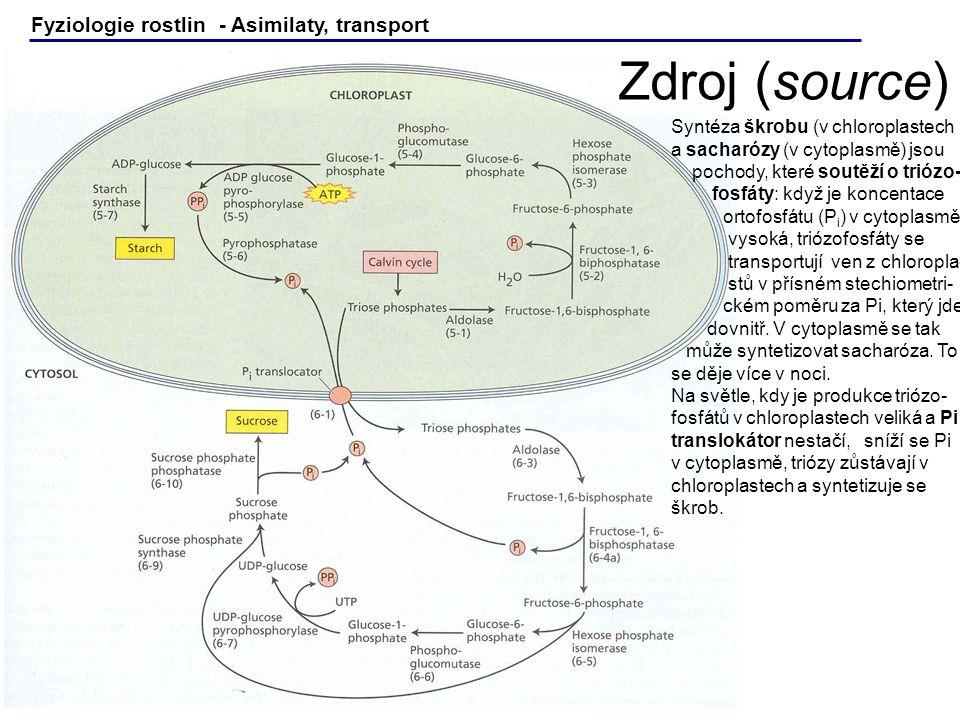 Zdroj (source) Fyziologie rostlin - Asimilaty, transport