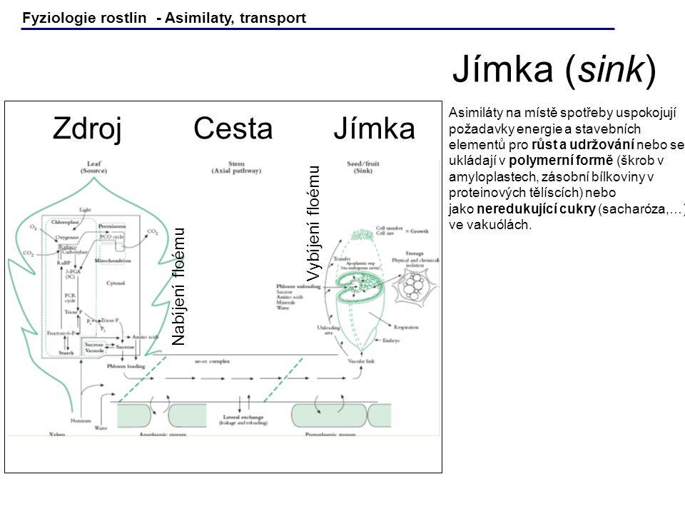 Jímka (sink) Zdroj Cesta Jímka Vybíjení floému Nabíjení floému