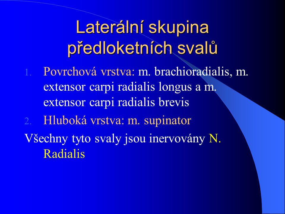 Laterální skupina předloketních svalů
