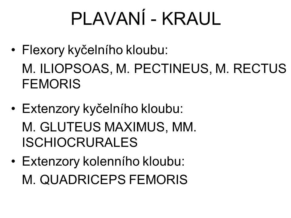 PLAVANÍ - KRAUL Flexory kyčelního kloubu: