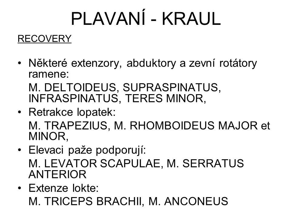 PLAVANÍ - KRAUL Některé extenzory, abduktory a zevní rotátory ramene: