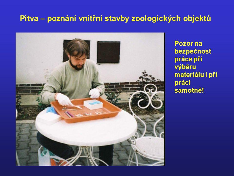 Pitva – poznání vnitřní stavby zoologických objektů