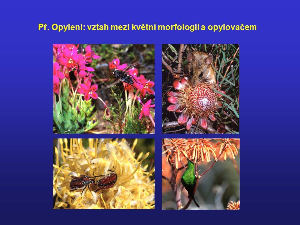 Př. Opylení: vztah mezi květní morfologií a opylovačem