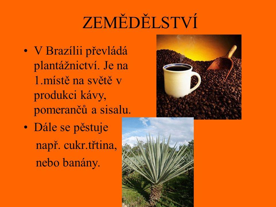 ZEMĚDĚLSTVÍ V Brazílii převládá plantážnictví. Je na 1.místě na světě v produkci kávy, pomerančů a sisalu.