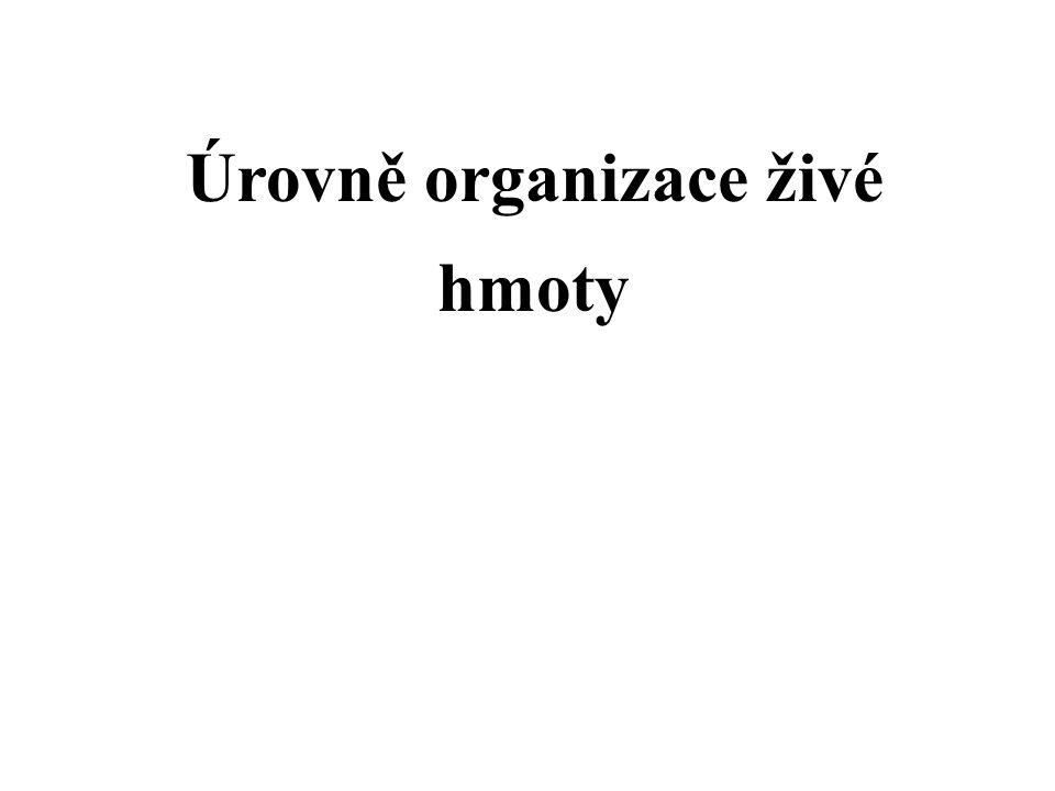 Úrovně organizace živé hmoty