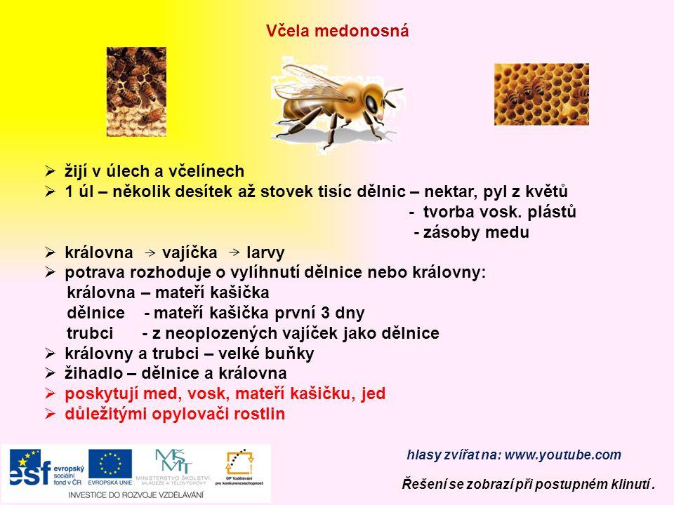 žijí v úlech a včelínech
