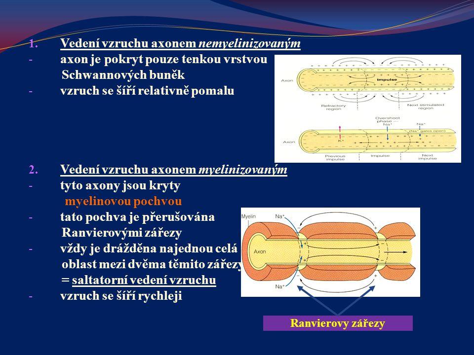 Vedení vzruchu axonem nemyelinizovaným