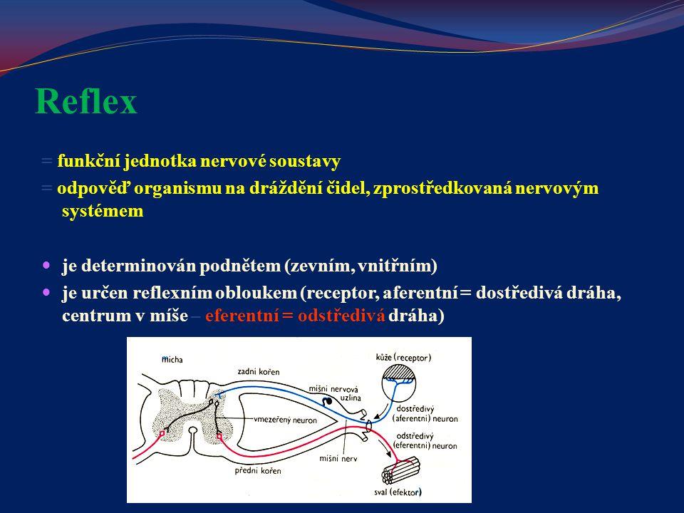 Reflex = funkční jednotka nervové soustavy