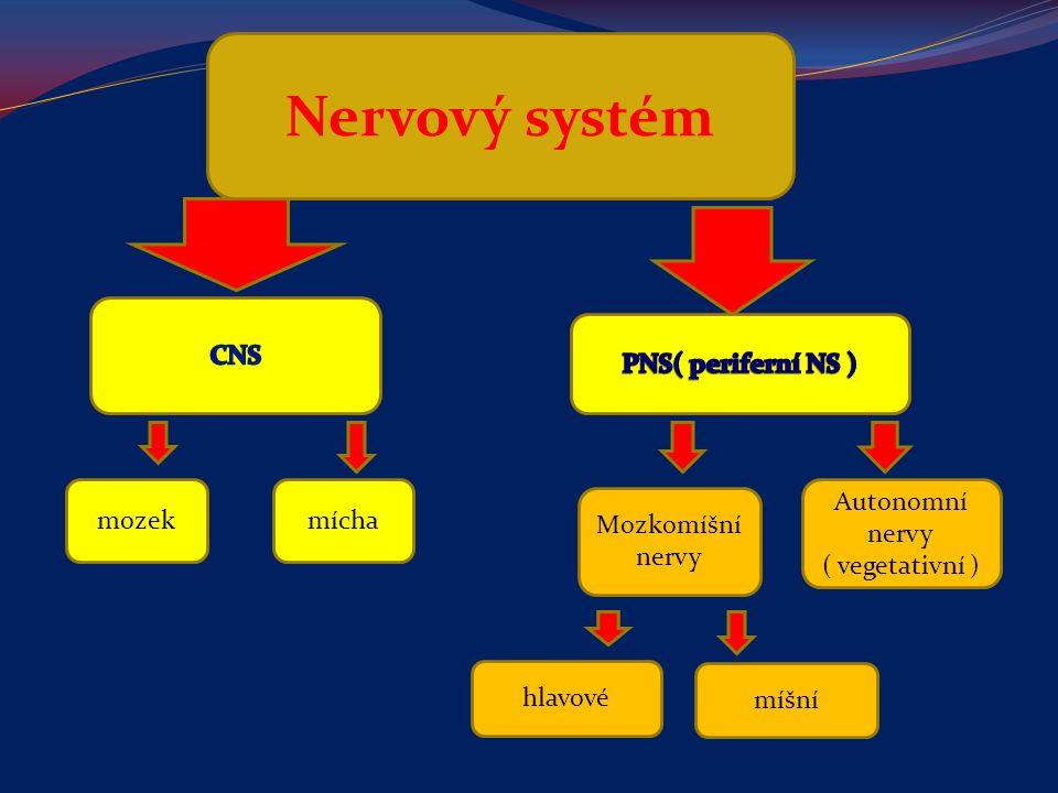 Nervový systém CNS PNS( periferní NS ) mozek mícha Autonomní nervy