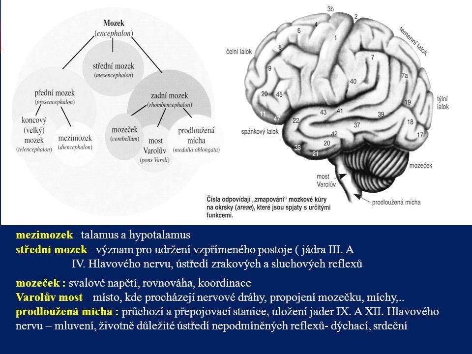 mezimozek : talamus a hypotalamus
