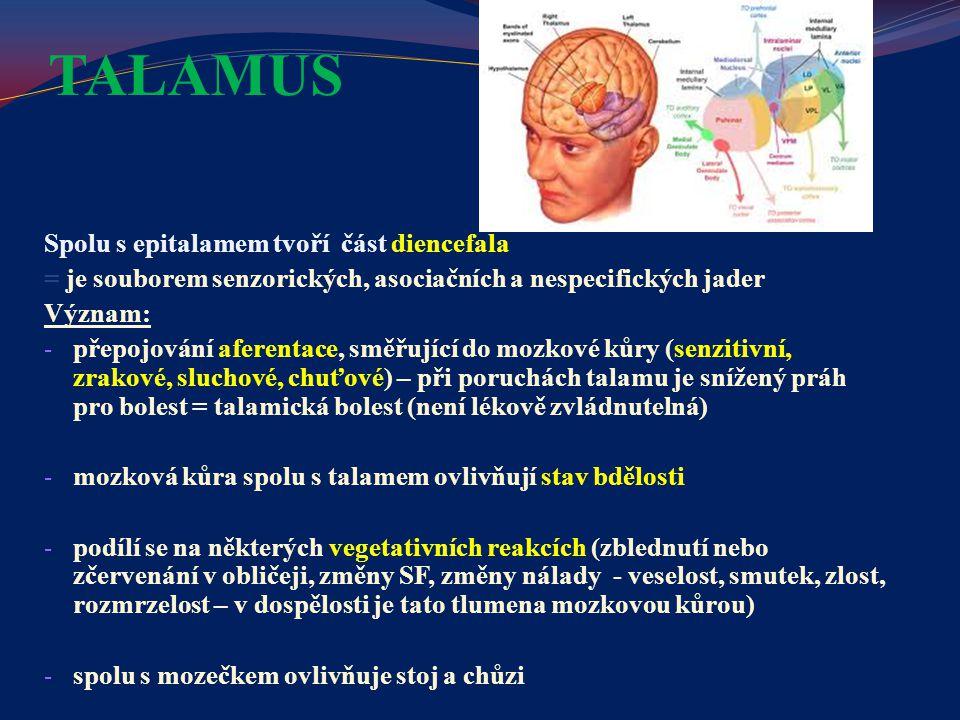 TALAMUS Spolu s epitalamem tvoří část diencefala