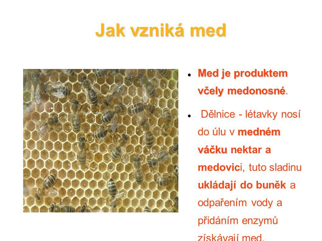 Jak vzniká med Med je produktem včely medonosné.