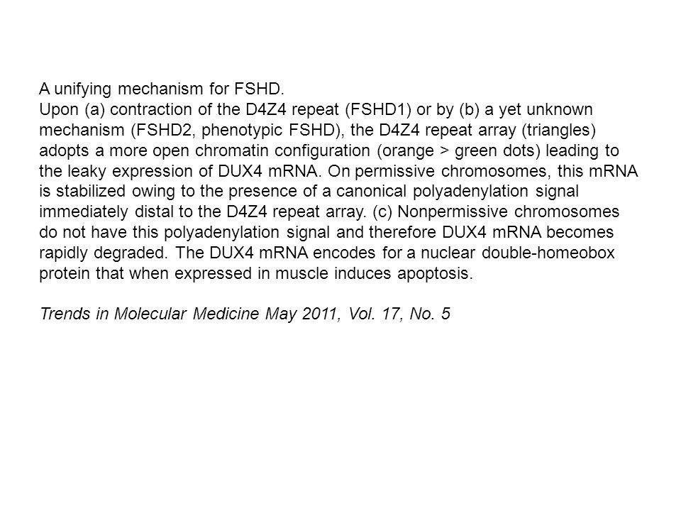 A unifying mechanism for FSHD.