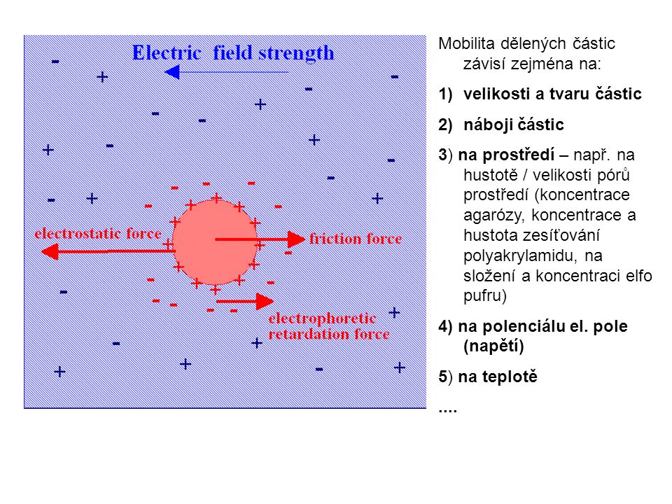 Mobilita dělených částic závisí zejména na: