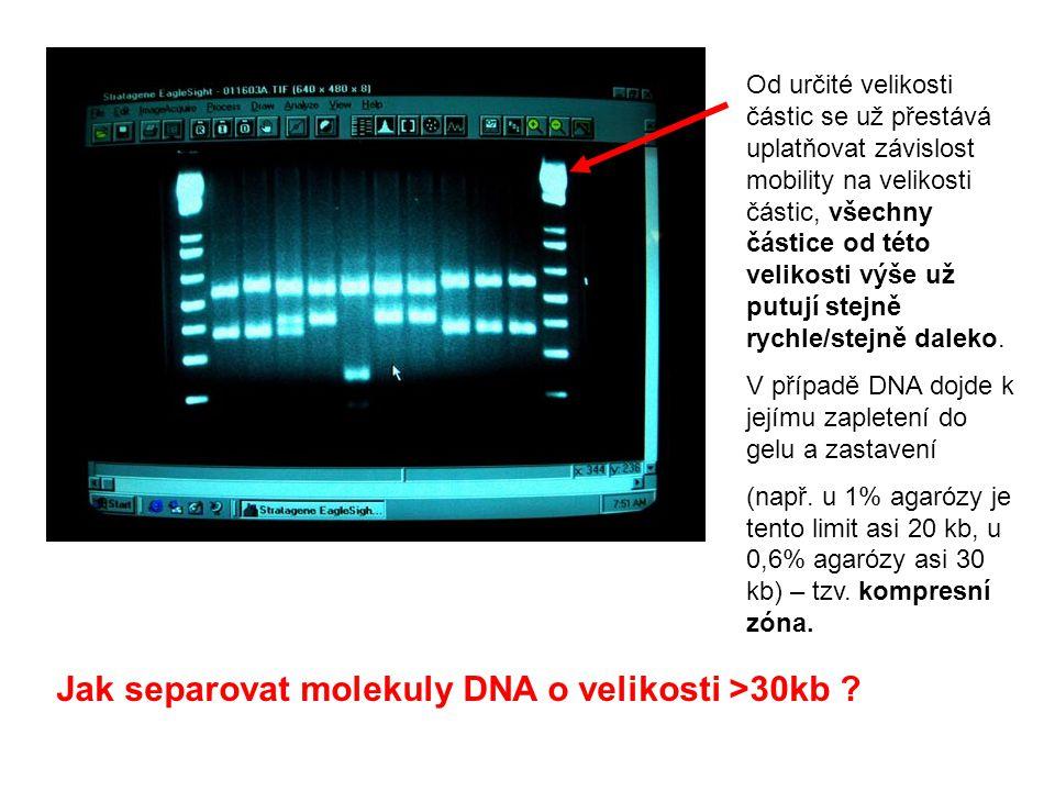 Jak separovat molekuly DNA o velikosti >30kb