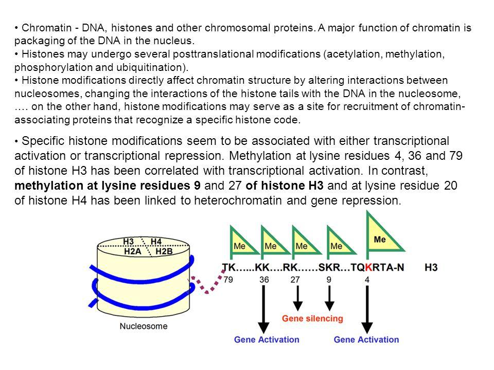 Chromatin - DNA, histones and other chromosomal proteins