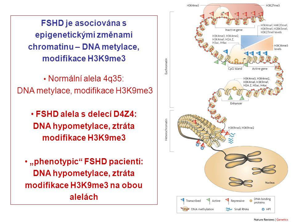 DNA metylace, modifikace H3K9me3 FSHD alela s delecí D4Z4: