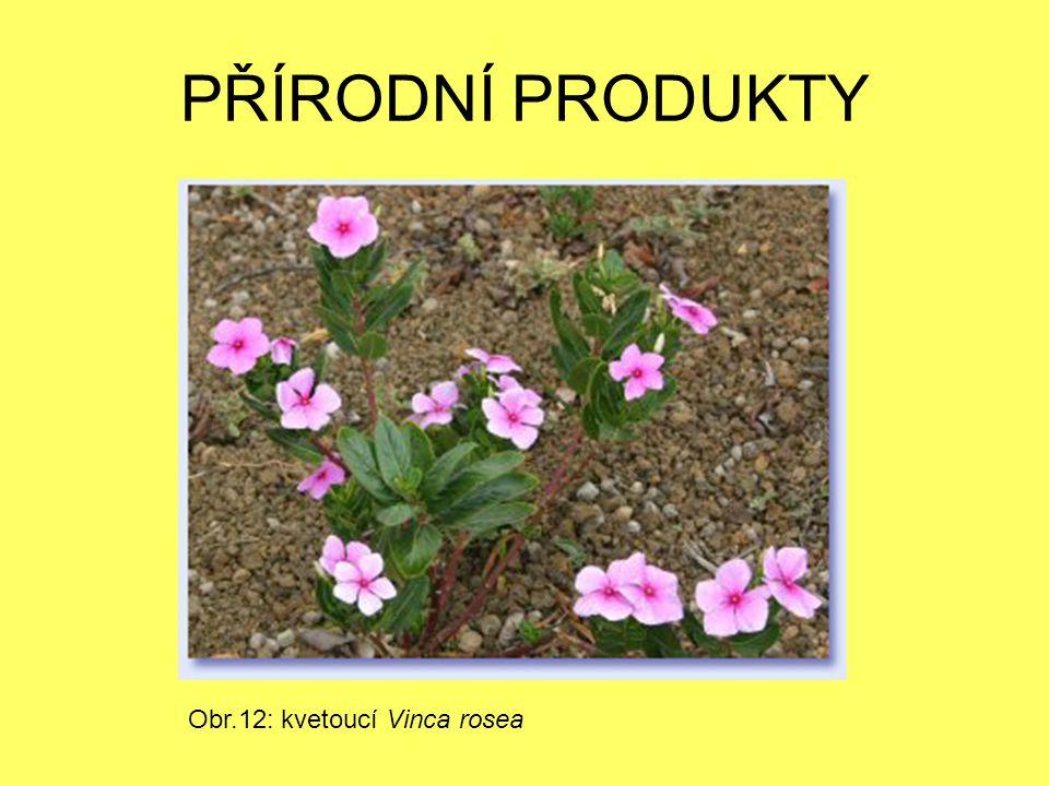 PŘÍRODNÍ PRODUKTY Obr.12: kvetoucí Vinca rosea