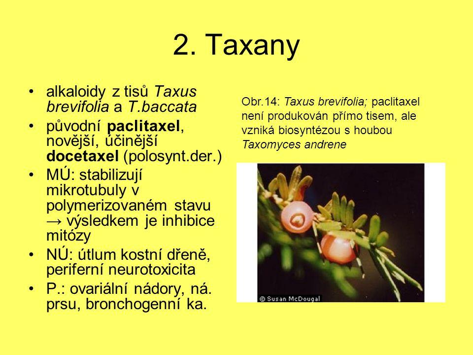 2. Taxany alkaloidy z tisů Taxus brevifolia a T.baccata