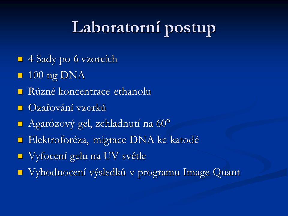 Laboratorní postup 4 Sady po 6 vzorcích 100 ng DNA