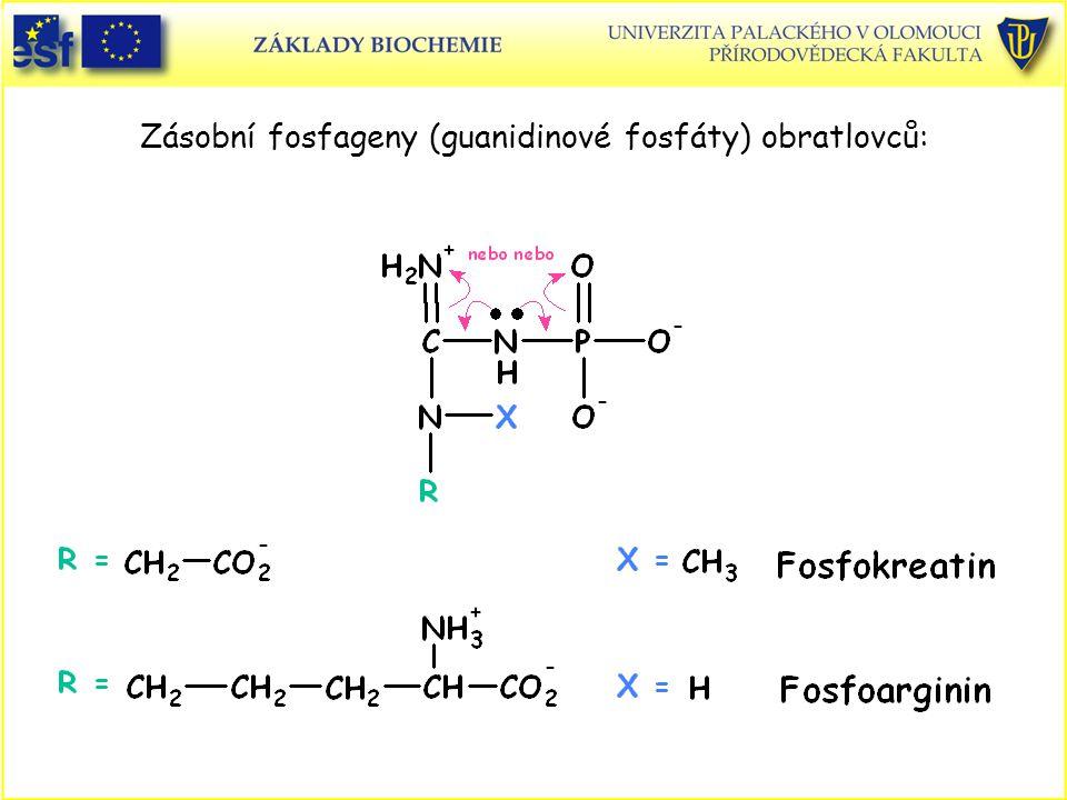 Zásobní fosfageny (guanidinové fosfáty) obratlovců: