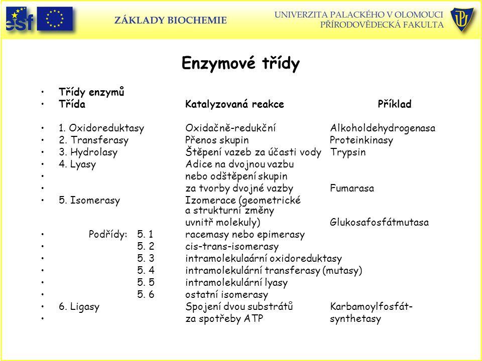 Enzymové třídy Třídy enzymů Třída Katalyzovaná reakce Příklad