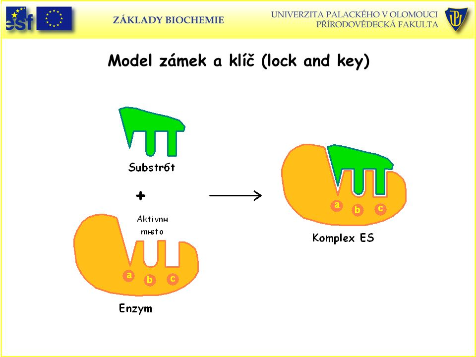 Model zámek a klíč (lock and key)