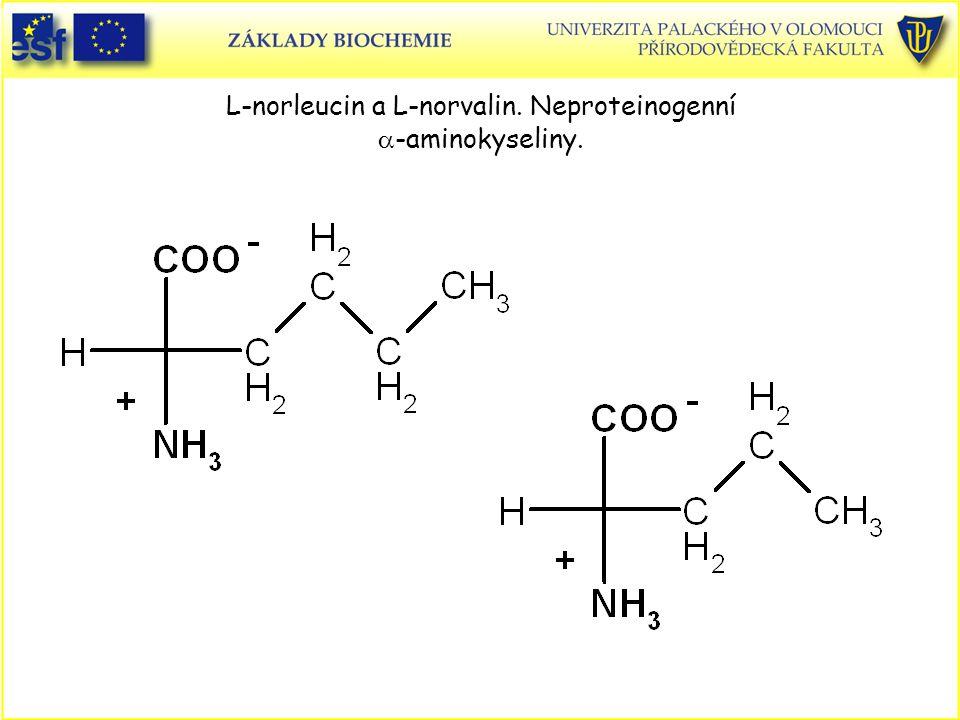 L-norleucin a L-norvalin. Neproteinogenní a-aminokyseliny.