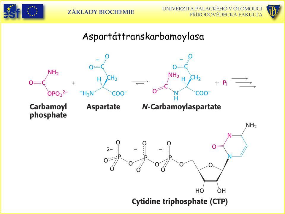 Aspartáttranskarbamoylasa