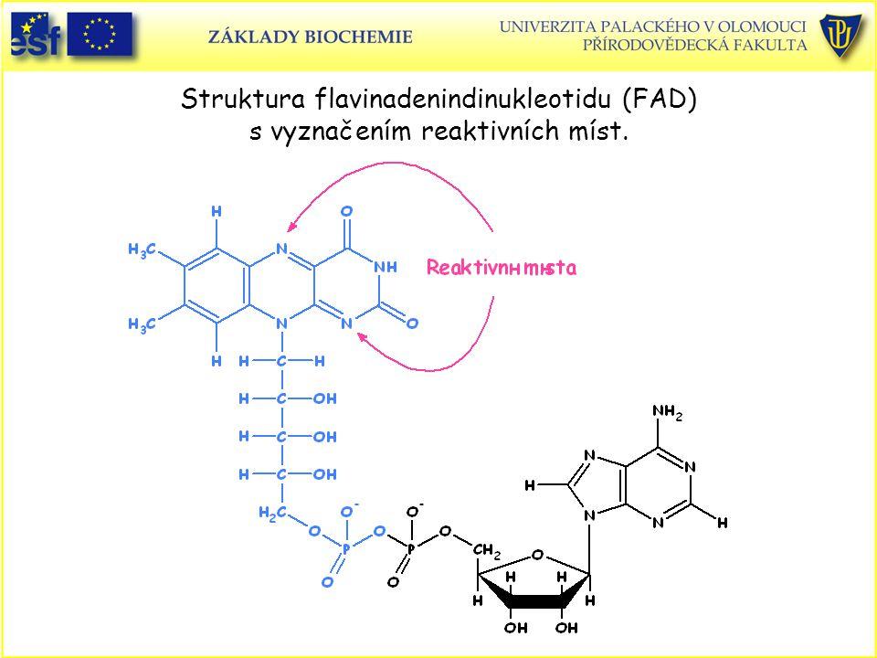 Struktura flavinadenindinukleotidu (FAD) s vyznačením reaktivních míst.