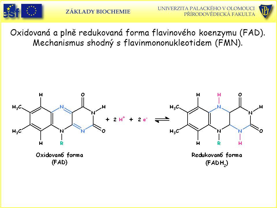 Oxidovaná a plně redukovaná forma flavinového koenzymu (FAD)