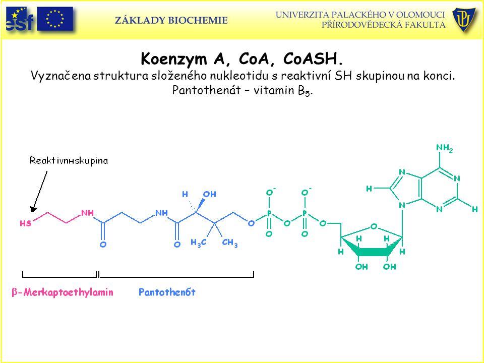 Koenzym A, CoA, CoASH. Vyznačena struktura složeného nukleotidu s reaktivní SH skupinou na konci.