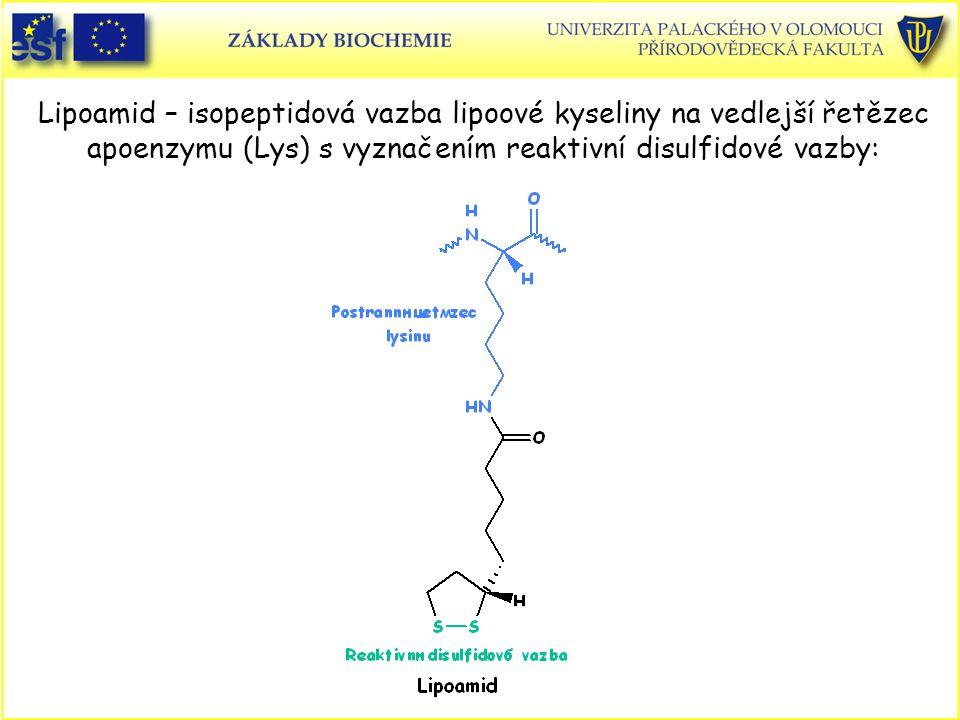 Lipoamid – isopeptidová vazba lipoové kyseliny na vedlejší řetězec apoenzymu (Lys) s vyznačením reaktivní disulfidové vazby: